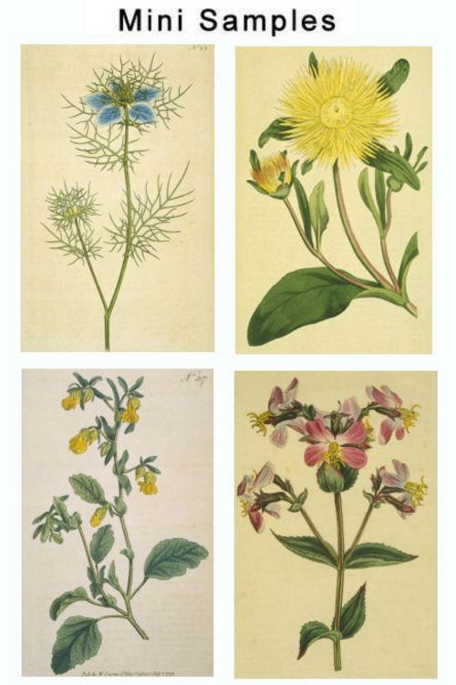 Product picture Vintage Floral Images 1,000