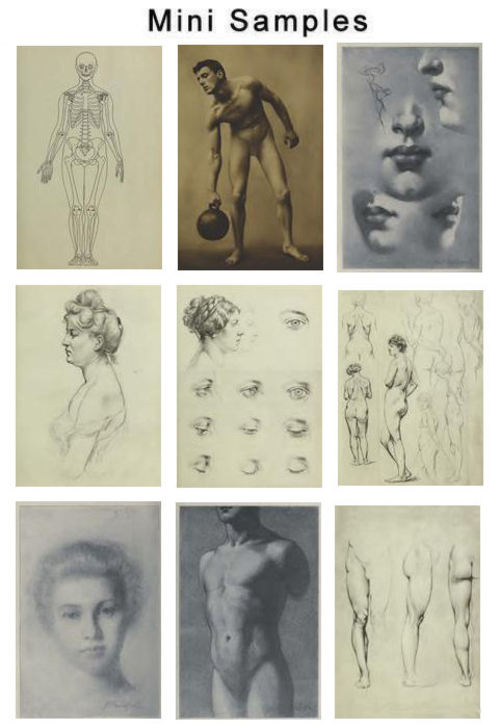 Product picture The Human Figure  Vintage Images HQ 625