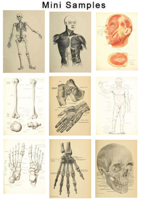 Product picture The Human Anatomy Vintage Images HQ 609