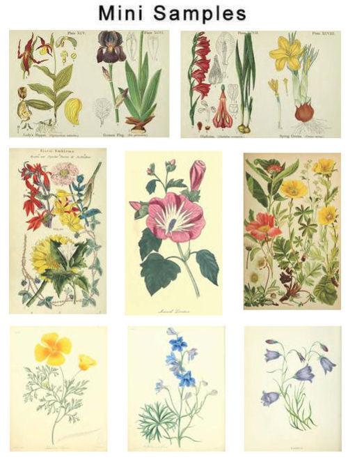 Product picture Floral & Flower Vintage Images HQ 362
